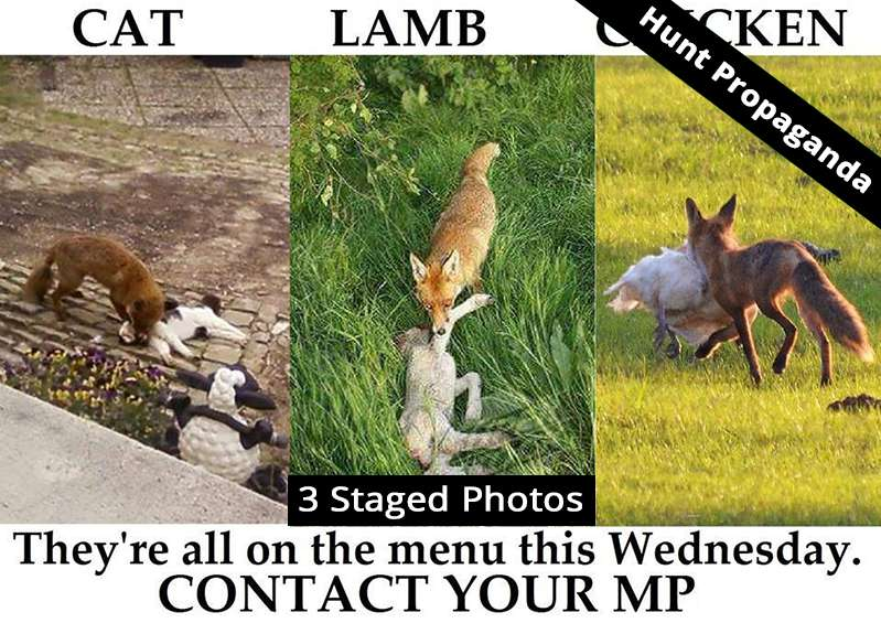 Anti fox propaganda by hunt supporters on social media