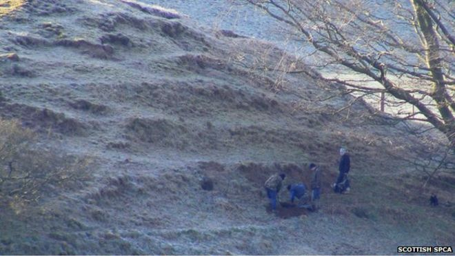The father and son were photographed digging into a badger sett in Lanark