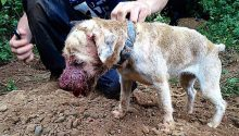 A mobile phone picture showing injury and cruelty to a terrier