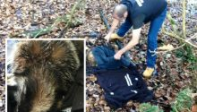 Cruel yobs who shot badger slammed by Nuneaton sanctuary owner