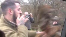 Horrific moment hunt supporter batters dead fox against protesters van