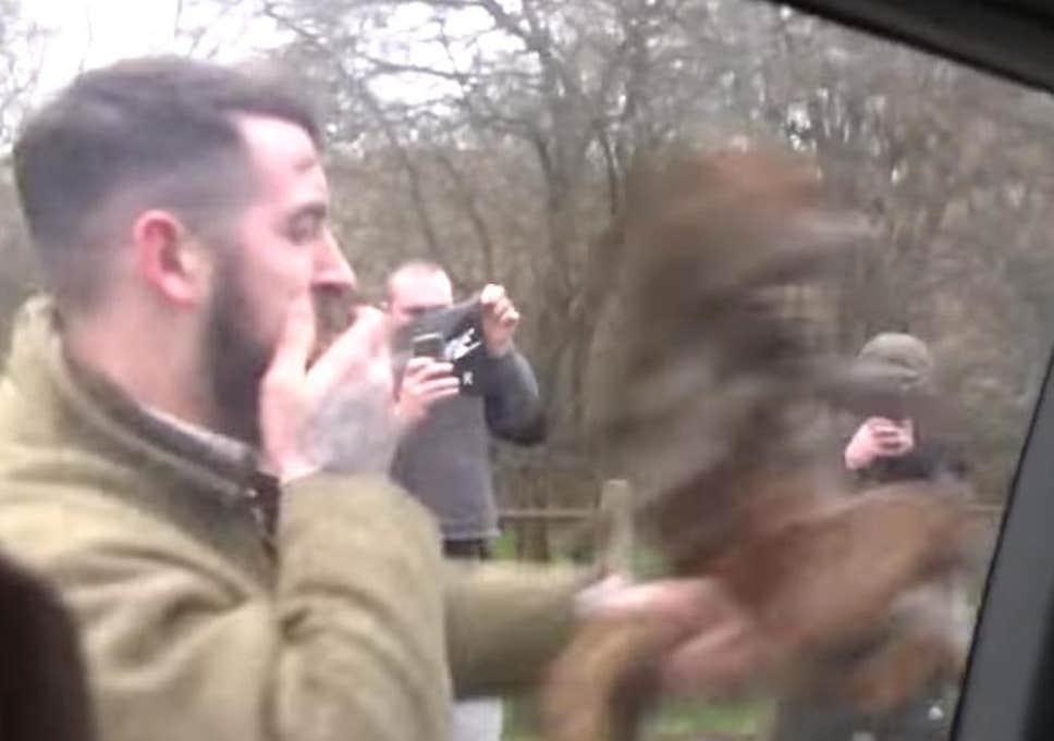 Badsworth and Bramham Moor Hunt supporter hammers the fox at the window