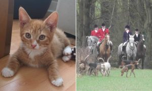 Bramham Park: Kitten killed during a fox hunt