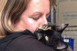 Cat killed by hunting dogs and thrown over fence by huntsman