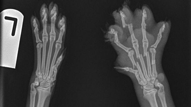 The Bones In A Cat S Foot
