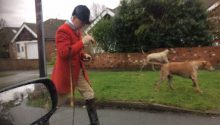 Pack of hounds broke into elderly couple's back garden before savaging a fox