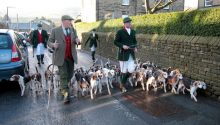 Colne Valley and Holme Valley Beagles joint meet at Holme village in 2013