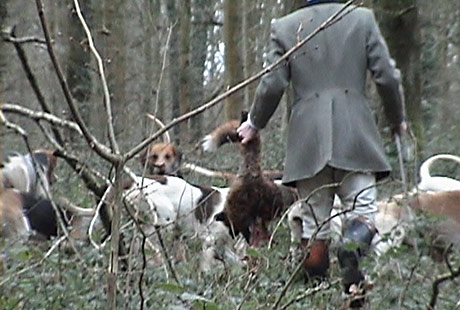 KILL: One of two kills by the Crawley and Horsham Hunt
