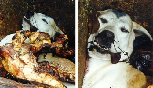 Hound killed and dumped by a foxhunt