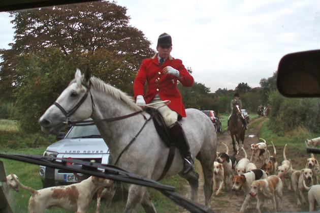 Hounds and hunt staff of the East Kent with West Street Hunt