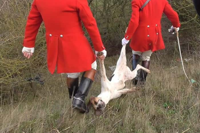 Fitzwilliam Hunt staff carry foxhounds body away