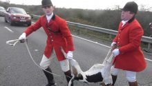 Fitzwilliam Hunt hound killed chasing fox across A14