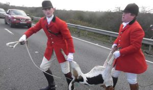 The Fitzwilliam Hunt foxhound was killed on the A14
