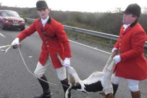 Fitzwilliam Hunt hound killed chasing fox across A14