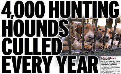 Thousands of healthy fox-hounds killed each year