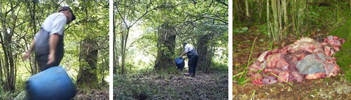 Hunts fox feeding and artificial earths