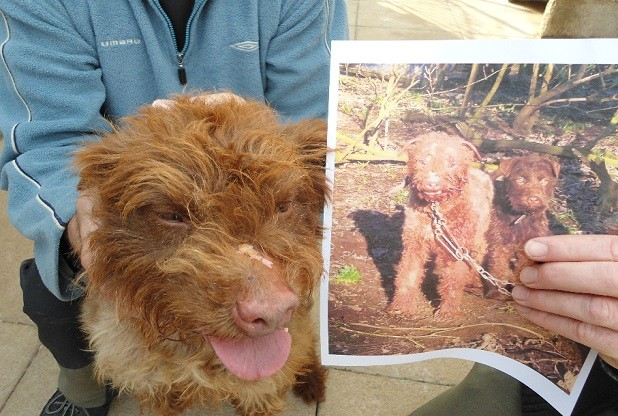 One of the dogs after it was rescued, with a photo found by the RSPCA