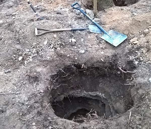 Five men found guilty of animal cruelty after being caught badger baiting in East Yorkshire