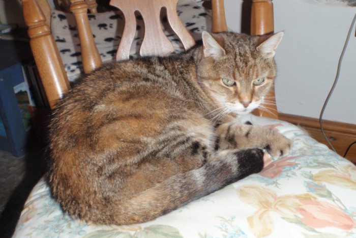Moppet the cat, savagely killed by hunting dogs