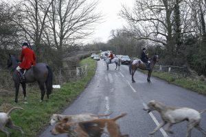 Foxhounds chased fox over open grave during burial