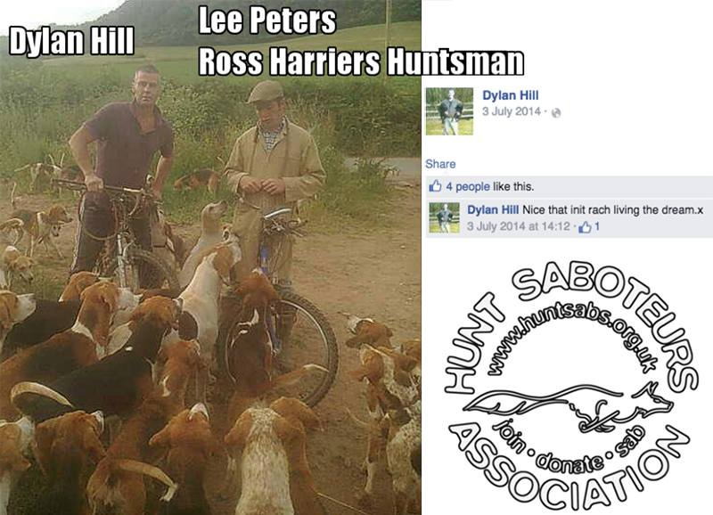 Dylan Hill hound exercising with Ross Harriers huntsman Lee Peters