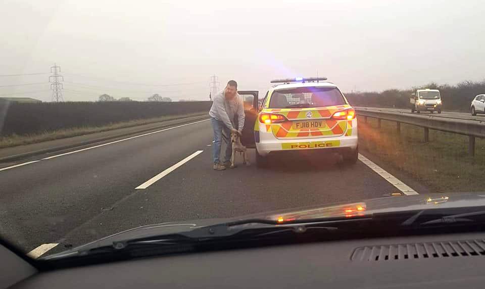 South Notts Hunt foxhound (Image: Nottingham Hunt Saboteurs)
