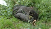 Otter family drowned after getting caught in illegal net trap