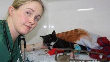 Vet Hannah Williams comforts the cat