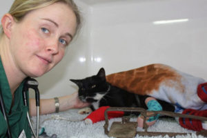 RSPCA probe after Warwick cat loses toes in illegal trap